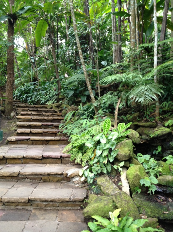 Let your writing take you into the unknown. (By the way, I visited this jungle path, at Queen Sirikit's palace grounds on Doi Suthep, near Chiang Mai, Thailand, in November. I didn't realise until I got home that I had been there before, 20 years ago).