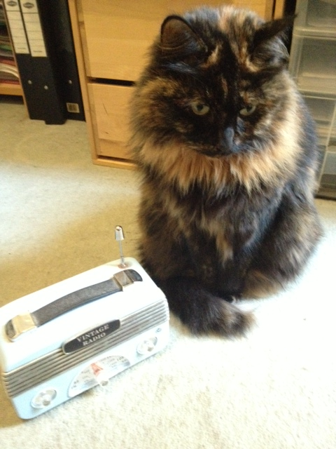 Radio Lucy: my cat likes to listen to the radio. I've heard they also like a CD, and there are some specially made for cats. That might be taking it a bit far. Picture © Caron Eastgate Dann, 2013.