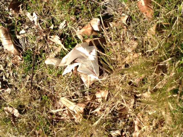 ...But you might be able to bring yourself to pick this up. It's a crumpled bit of paper, in among the leaves and grass.